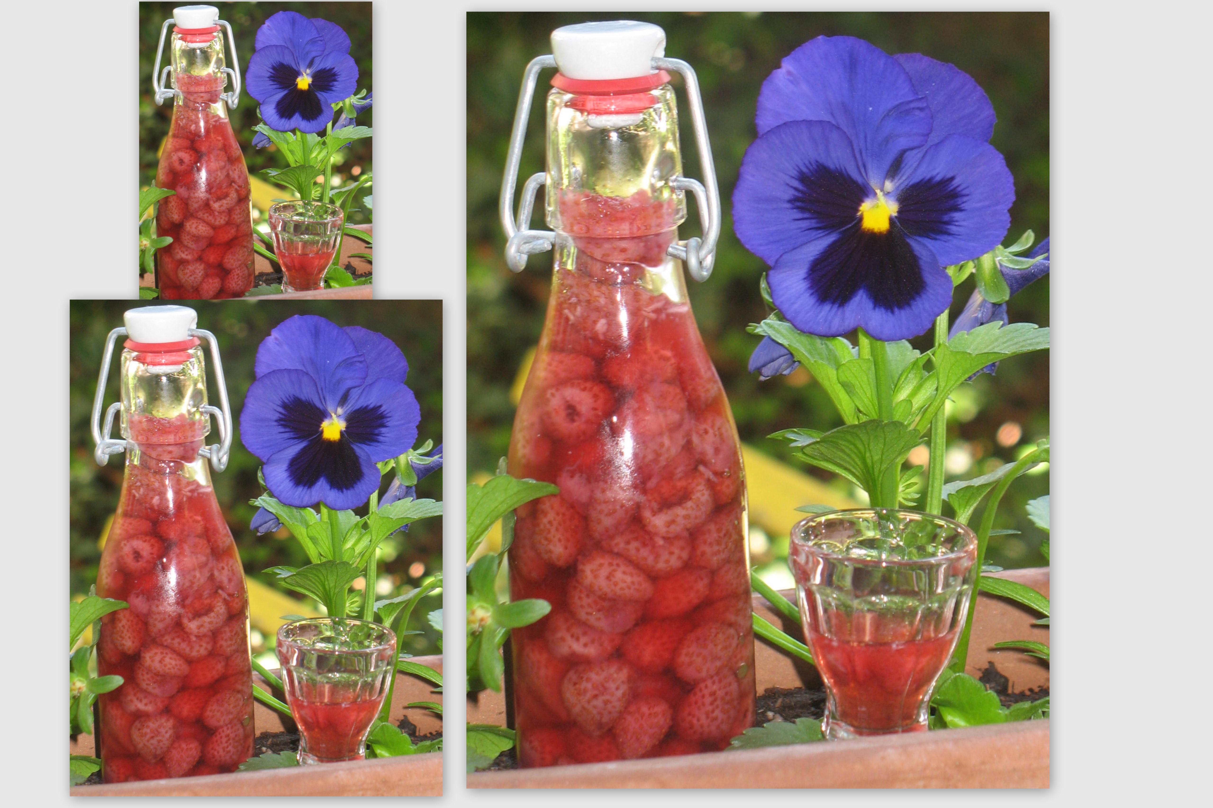 La cuisine de dom liqueur de fraises des bois maison for Alcool de poire maison